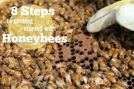 8 Steps to Getting Started with Honeybees<br/>#honeybees &nbsp; #beekeeping &nbsp;&hellip; | Permaculture, Horticulture, Homesteading, Bio-Remediation, &amp; Green Tech | Scoop.it
