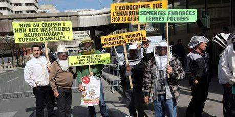 Abeilles : des députés britanniques demandent l'interdiction de pesticides   Environment & Ecology   Scoop.it