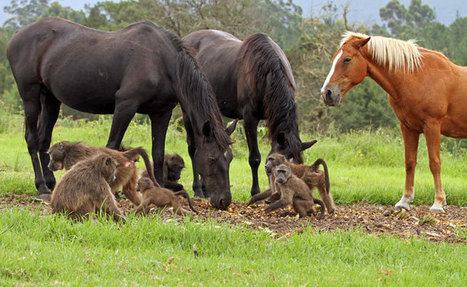 Baboons and horses monkey around - Africa Geographic Blog | Animals and Other Stories | Scoop.it