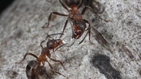 Les fourmis, biodiversité et pollution | EntomoScience | Scoop.it