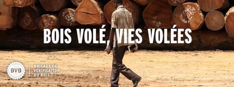Bois volé - vies volés : la crise silencieuse du trafic de bois | Narration transmedia et Education | Scoop.it