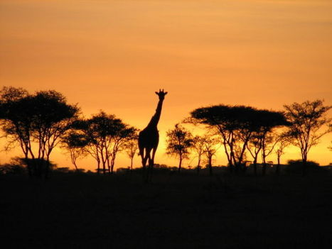 Gladiola Adventures Aims to Introduce Americans to Tanzania This Black History ... - Dallasweekly | Gyantz.com: Camping Safaris Tanzania | Scoop.it