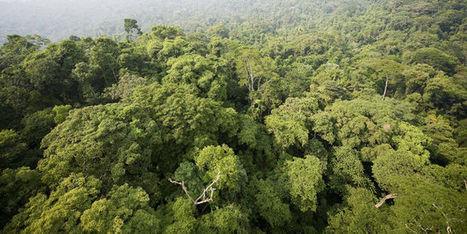 La forêt amazonienne ne résistera pas à un réchauffement climatique important | Planete DDurable | Scoop.it