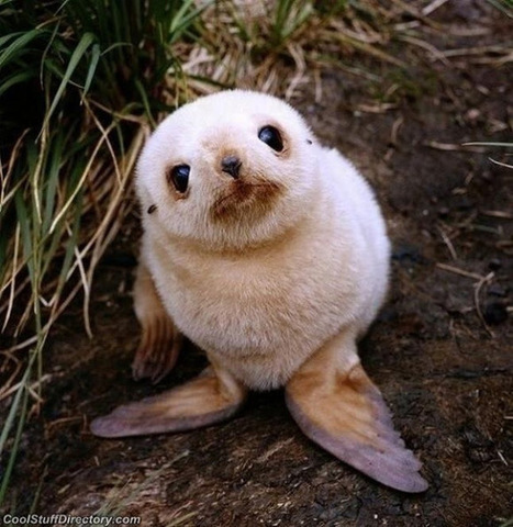 The Cutest Baby Animals in the World ~ Cool Stuff Directory | Baby Cool Stuff (from others) | Scoop.it