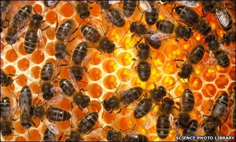 Future ban on bee-killing pesticides investigated | The Barley Mow | Scoop.it