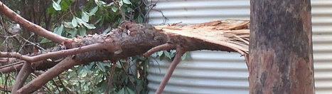 Treelander- Services- Landscaping, Tree Lopping, Tree Removal | Professional tree maintenance | Scoop.it