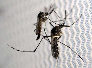 Zika sex research begins despite U.S. Congress funding impasse   Archaeology, Culture, Religion and Spirituality   Scoop.it