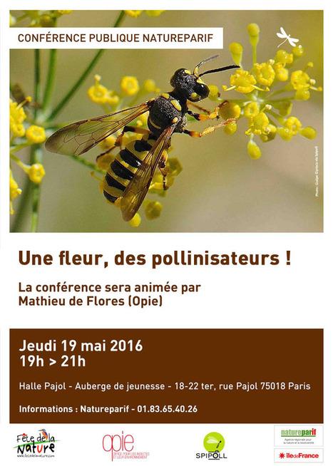 (2016) Retour sur la conférence : Une fleur, des pollinisateurs ! | Variétés entomologiques | Scoop.it