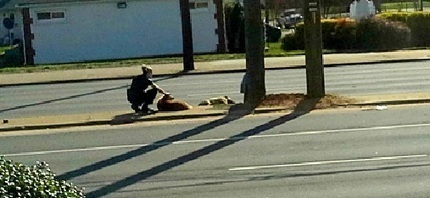 """Officer Saves Brokenhearted Dog on Busy Road 