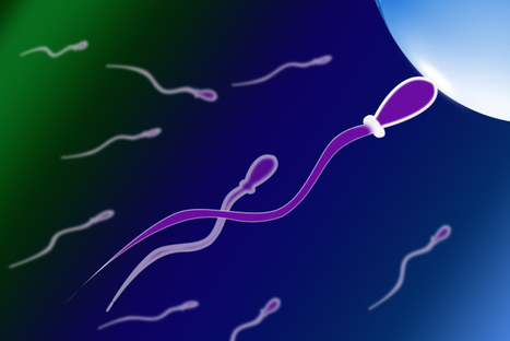 Enhance your sperm count naturally | Mens issue | Scoop.it