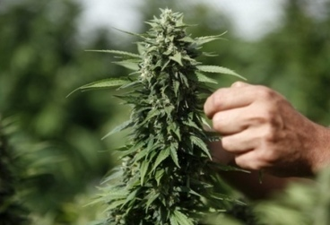 Étude israélienne : Le cannabis pourrait retarder la maladie de Crohn   Alyaexpress News   Cannabis News   Scoop.it
