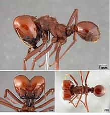 Colombia tiene doce especies de hormigas arrieras   Regiones y territorios de Colombia   Scoop.it