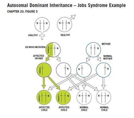 Inheritance | Immune Deficiency Foundation | Primary Immunodeficiency | Scoop.it
