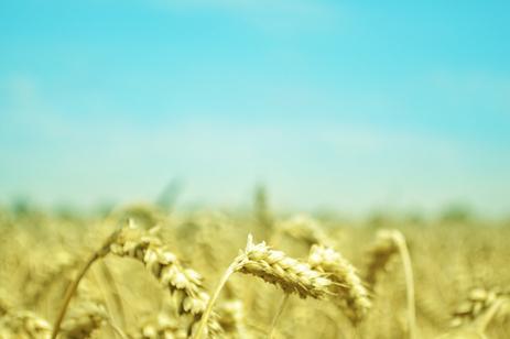 Phytic Acid in Grains and Legumes   Phytic acid   Scoop.it