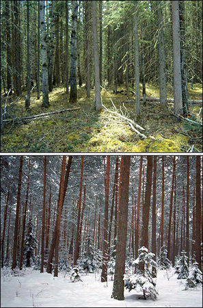 The Migrating Boreal Forest : Feature Articles | Taiga- Boreal Forest Biome | Scoop.it