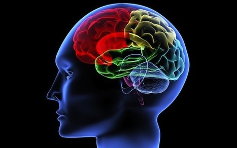 Aspartame Damages The Brain at Any Dose   Biology   Scoop.it