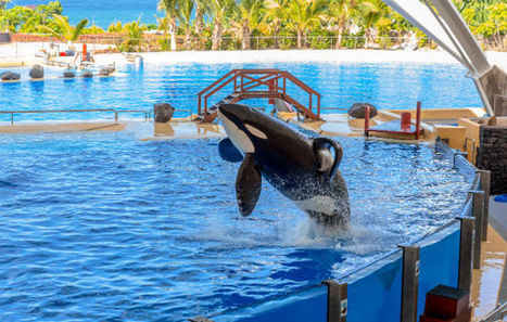 California Lawmaker to Propose Ban on Orcas in Captivity | Nature Animals humankind | Scoop.it