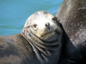 Take a boat out to see the wildlife in Ensenada Bay | Baja California | Scoop.it
