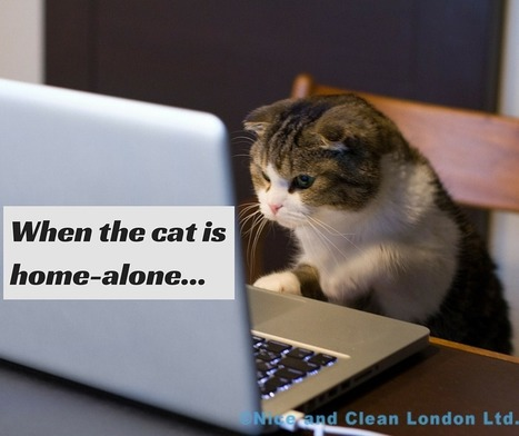 How to keep your cat busy when it's home-alone | familyonline | Scoop.it