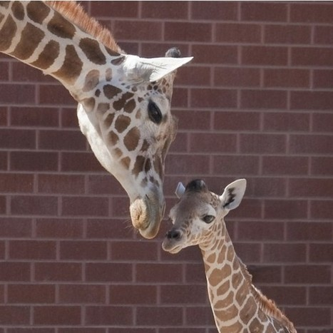 Love Animals | Help giraffes | Innovative Marketing and Crowdfunding | Scoop.it