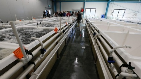 Cawthron Institute given research-funding boost in latest bidding round - Aquaculture Directory | Aquaculture Directory | Scoop.it