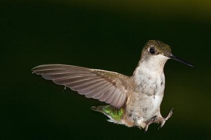 Hummingbird Algorithm: del contexto a la semántica lingüística en SEO | SEO | Scoop.it