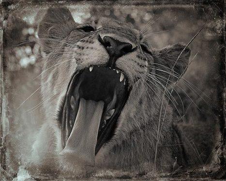Creatures – Les superbes photographies animalières d'Antti Viitala | Biodiversité | Scoop.it