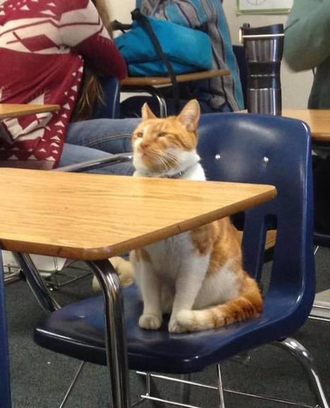 Adorably Studious Cat is Adopted by a High School, Issued His Own ID Card | Le It e Amo ✪ | Scoop.it