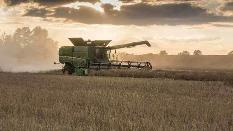 Oilseed rape price jumps £14/t in a week - Farmers Weekly | Grain du Coteau : News ( corn maize ethanol DDG soybean soymeal wheat livestock beef pigs canadian dollar) | Scoop.it