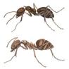 Ant Infestation Union City