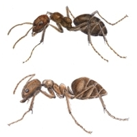 Tips for the Prevention of Common Ants | Ant Infestation Union City | Scoop.it