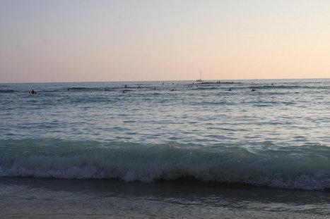 2016IMG_2630   ❀ hawaiibuzz ❀   Scoop.it