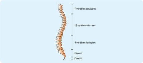 Lombalgie commune aiguë (lumbago) : symptômes - ameli-santé | douleur lombaire | Scoop.it