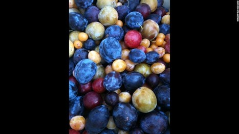 Growing 40 types of fruit on one tree - CNN.com | CW | Scoop.it