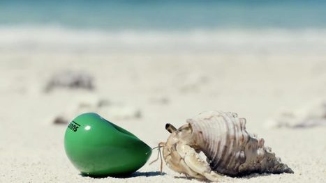 Japanese Real Estate Company Gives Hermit Crabs A New Home | Marine Litter, Trash | Muell im Meer | Scoop.it