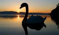 El cisne negro de Nassim Nicholas Taleb | PlanUBA | Scoop.it