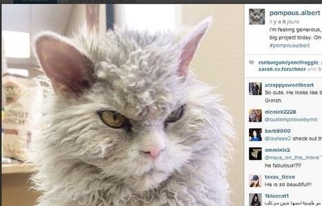 Pompous Albert, le chat qui défrise Albert Einstein   CaniCatNews-actualité   Scoop.it