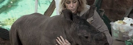 Rhino Rescue and Rehab Workshop Coming Up | Rhino poaching | Scoop.it