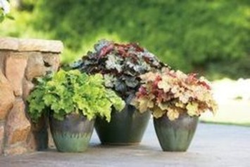 Mum's not the only word for fall planting   Container Gardening   Scoop.it