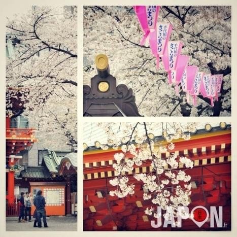 Au Japon, quand il neige des pétales de cerisiers, les Sakura sont bientôt finis ! | Le meilleur de vous | Scoop.it