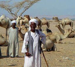 Abraham's Camels - Virtue Online   Ancient Origins of Science   Scoop.it