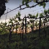 Austrália, Douro, Vinho do Porto e reputação | Notícias escolhidas | Scoop.it