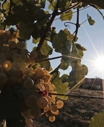 Italy's Wine Woes | Southern California Wine and Craft Spirits Journal | Scoop.it