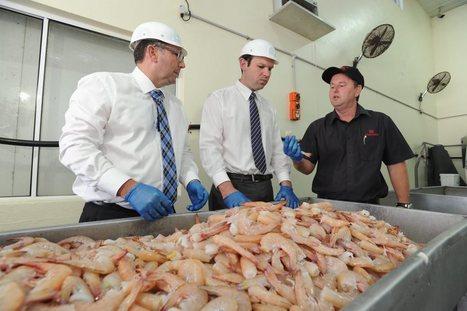Govt is coming the raw prawn: fishos - Fraser Coast Chronicle   Aquaculture (Global Aqua Link)   Scoop.it