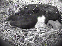 MFA Willet Dairy Investigation Leads to Criminal Animal Cruelty Conviction - MFA Blog   Nature Animals humankind   Scoop.it