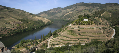 Berry Bros, London: introduction to Port, 15th April 2013 | The Douro Index | Scoop.it