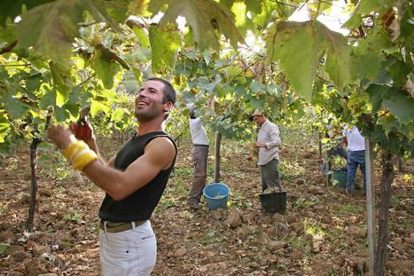 Taking Land From the Mafia, Giving It to Farmers - Modern Farmer | oskreddy | Scoop.it