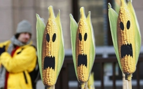 Scientists Savage Study Purportedly Showing Health Dangers of Monsanto's Genetically Modified Corn - Forbes | A Better Food System | Scoop.it