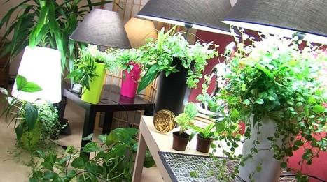 Lumipouss' : un concept inédit de plante-lampe très design | Relations Publiques . Pro | Eco & Bio | Scoop.it