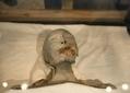 50 momies découvertes en Egypte - France Info | Découvertes achéologiques en Egypte | Scoop.it
